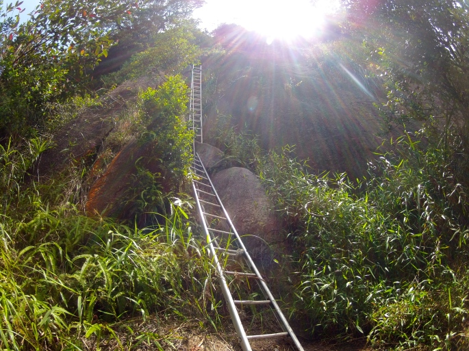 The abundance of ladders of gunung Ledang make the mountain stand out from others