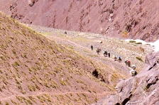 Donkeys along the way required for our expedition